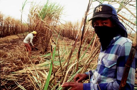 trabalho-escravo-tema-social (1)