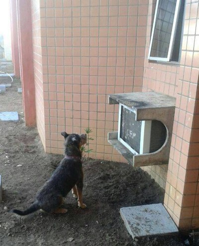 cachorro-teresina