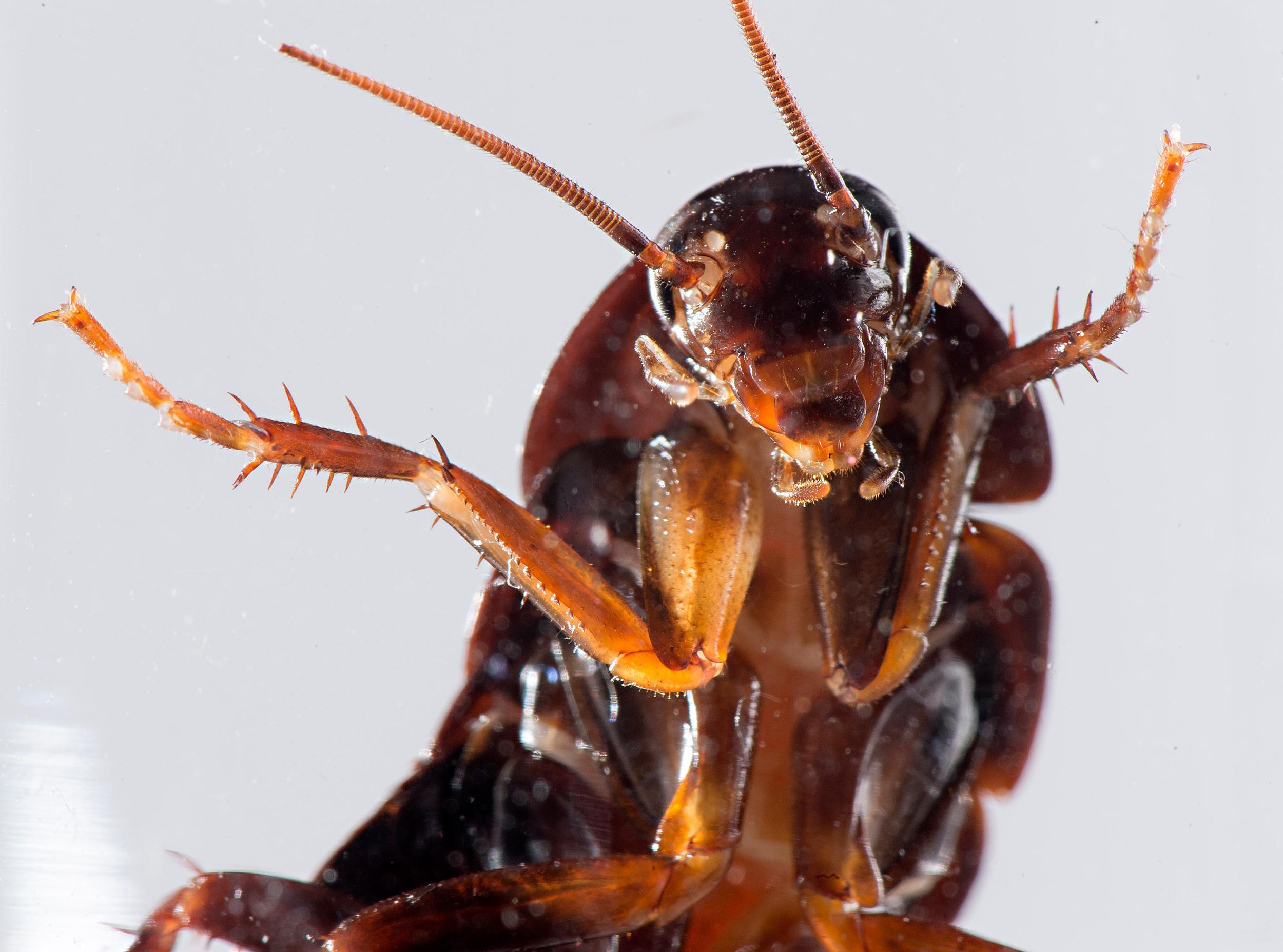 cockroach-01