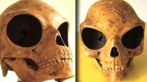 Crânio não pertence a nenhuma espécie terrestre