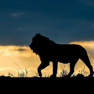 África-animais-1