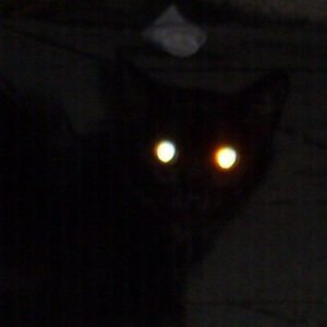 black_cat_with_glowing_eyes