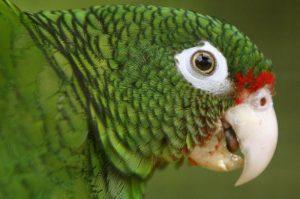 blog_parrot