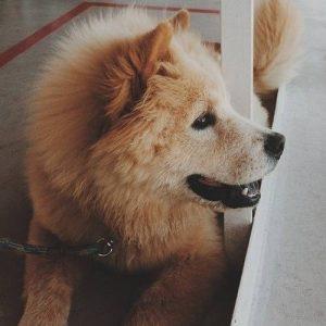 312834-dogs-cuteness