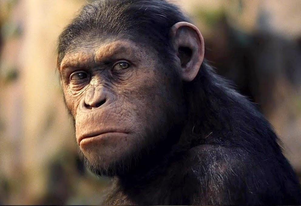 7 espécies de seres humanos que já existiram