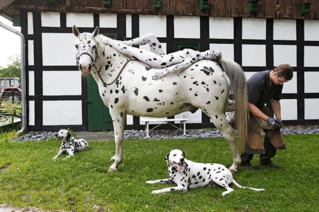 Horse Bodypainting Jörg Düsterwald