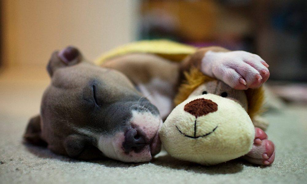 cachorro dormindo 2 e1490408765189