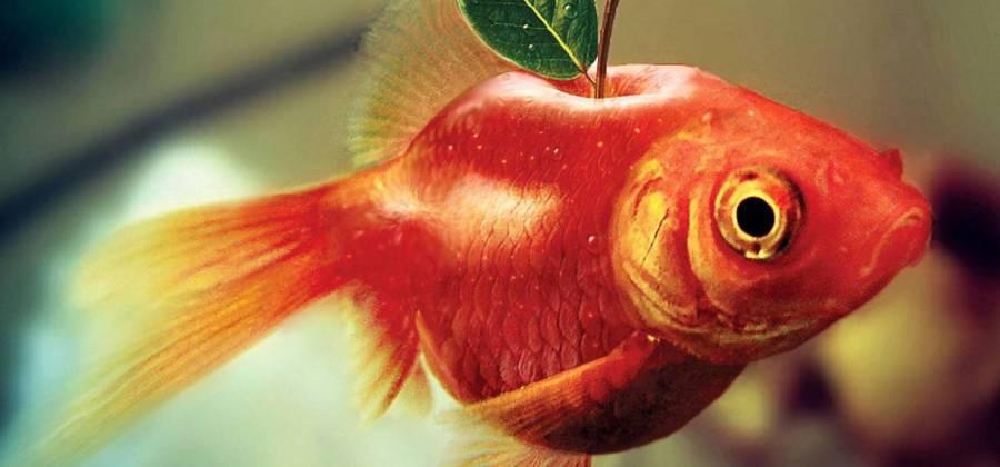 tiere pflanzen mashup fisch apfel