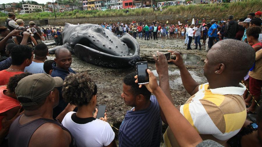 baleia jubarte morreu na manha de sexta feira 30 tres horas apos encalhar na praia de coutos suburbio de salvador ba e atraiu a atencao de moradores