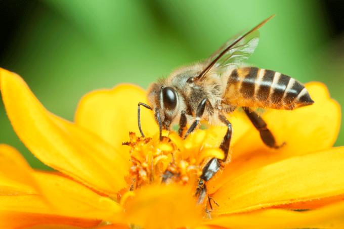 size 960 16 9 abelhapolitica